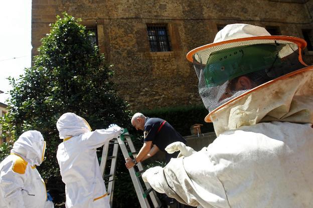 Bomberos procediento a retirar una colmena en el monasterio de San Pelayo. / PABLO LORENZANA
